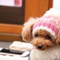 ニット帽☆