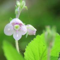 初夏の花と2CELLOS - I Will Wait