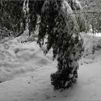 1月15日(日) 雪が降って別世界