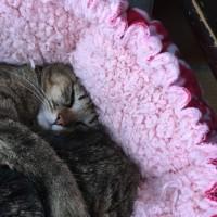 ボンちゃんの寝方。笑笑