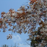 のどかな春の日だが、・・・