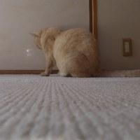 3)光を追う ネコ