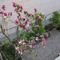 我家の庭の花🌺風景♪