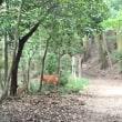 🚶〜鹿親子遭遇〜朝日山〜塔の島〜宇治川沿〜