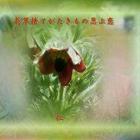 フォト575『 翁草捨てがたきもの忍ぶ恋 』qx0705