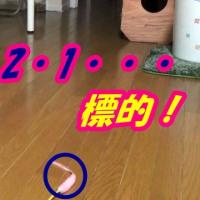 ダイソン買えずに100均ホウキが活躍【猫日記こむぎ&だいず】2017.04.024