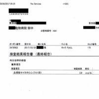 伽羅の肝炎&脳卒中&甲状腺障害日記(22)