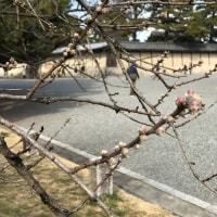京都御苑を散策しました