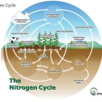 ―窒素と水の話―