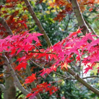 紅葉を愛でるお年寄りで賑わう東京の九品仏浄真寺