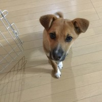 呉市動物愛護センターからお引っ越ししてきたラッキ〜ちゃんです。