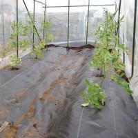 5月24日・トマトの雨除けハウス完成&定植!