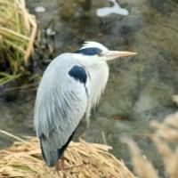 冬鳥を撮るⅡ