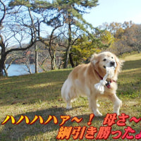 志高湖(別府市・大分県)へ紅葉見物へ行ったんだ!