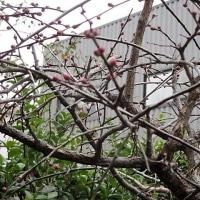 日本中 厳しい寒さがつづいています