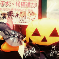 Trick or Treat ♪