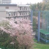 ☆ 思い出のお花見 をパーッと(^^♪ ☆