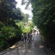 矢田寺(奈良)へ、紫陽花を見に。
