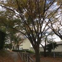 龍馬寺田屋まできれいな川辺の小道
