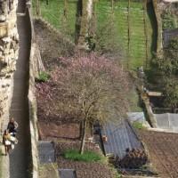 第2381回 Blossoming in Luxembourg City
