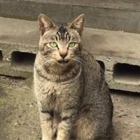猫のいやし 3