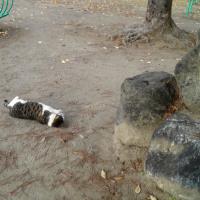 ★ 猫好き・・・塚本明里(あかり)ちゃん★(ฅΦωΦ)ฅ