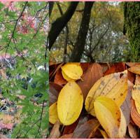 柔らかな紅葉の時季