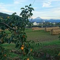 新宿の風景&山梨の風景 家の価格は10分の1? 空気は買えない!温泉に入りにかえりた~い。