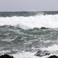 2/23探鳥記録写真(狩尾岬の鳥たち:イソヒヨドリ、ダイゼン、ウミアイサ他)