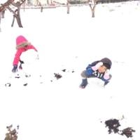 初雪、積もる。