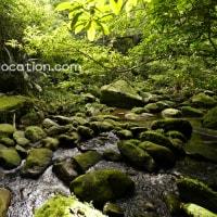 I love moss. ~ 苔が好き ~