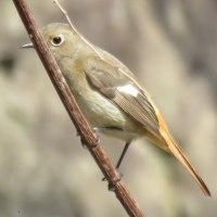 野鳥@神戸森林植物園