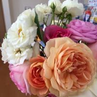 カラーに加えバラも...お花が沢山...!    筑紫野市原田 のりこキッズマム歯科医院