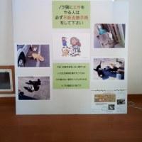 鎌倉駅地下道ギャラリー 展示