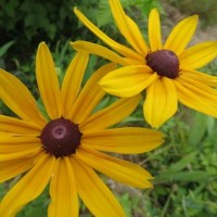 夏に咲く黄色い花