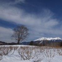 17年3/1~今日の御嶽山~コゲラ