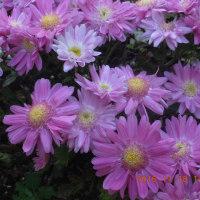 散文詞 ; 花の首飾り