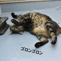 疲れた朝(^_^;)