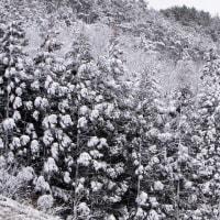 3月16日  春の雪景色