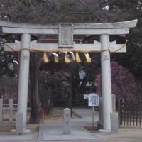 屯倉(みやけ)神社の枝垂れ梅が見頃 (大阪府松原市三宅)