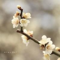 春のおとずれ。。。