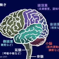 右脳を鍛える‼️