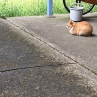猫三昧 Cat-loving - 外猫 : 通り雨 brief rain