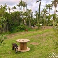 ヤシの木の散歩道 東南植物楽園