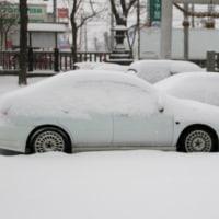 思いっきり降った雪