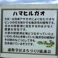 今浜町美崎のIM氏がきれいに整地された約20坪を遠慮無く使って!