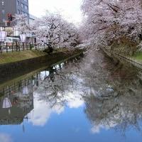 4月23日の弘前