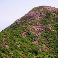雲仙岳を彩るミヤマキリシマ