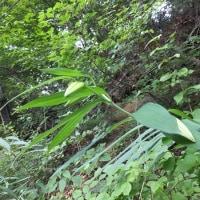 梅雨の晴れ間の高尾山散策 2016.6.26