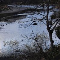 時々、広瀬川が見たくなる